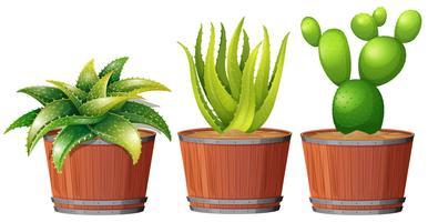 Cactus che cresce nel vaso vettore