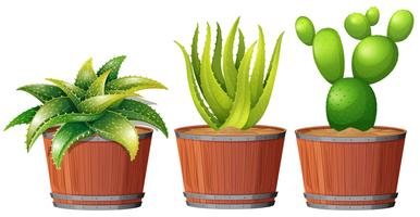 Cactus che cresce nel vaso
