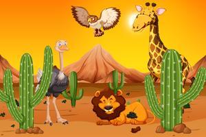 Animale selvaggio al deserto