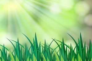 Scena di sfondo con erba verde vettore