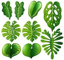 Set di diversi tipi di foglie