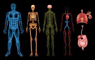 Sistemi del corpo umano vettore