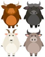 Animali da fattoria su sfondo bianco