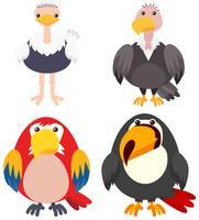 Quattro tipi di uccelli su sfondo bianco