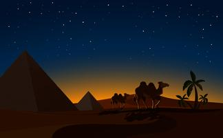 Piramide e cammelli nella scena notturna del deserto vettore