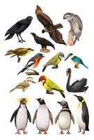 Diversi tipi di uccelli vettore