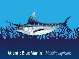 Marlin blu atlantico sotto il mare vettore