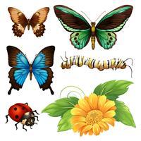 Diversi tipi di farfalle e insetti vettore