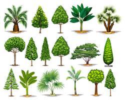 Diversi tipi di alberi verdi vettore