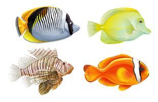 Pesce tropicale vettore