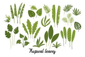 Insieme di vettore delle foglie tropicali astratte.