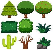 Set di piante verdi vettore