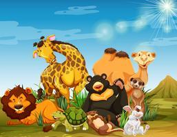 Molti animali selvatici nel campo