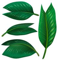 Set di foglie verdi su sfondo bianco