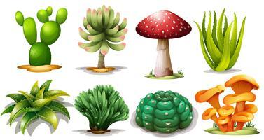 Set di diversi cactus