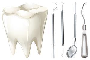 Set dentale con dente e attrezzatura vettore