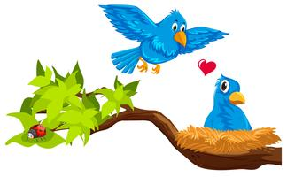 Coppia di uccelli nel nido