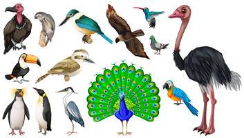 Set di varietà di uccelli selvatici