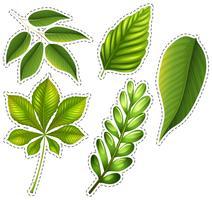 Diversi tipi di foglie verdi vettore