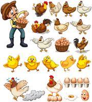 Agricoltore che raccoglie le uova dai polli