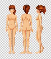 Set di corpo femminile vuoto vettore