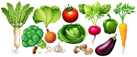 Diversi tipi di verdure vettore