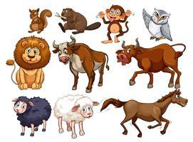 Animali selvaggi in vari tipi vettore