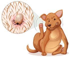 Cane con una pulce