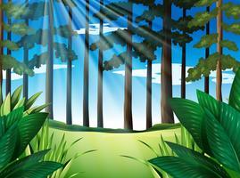 Scena della foresta con alberi durante il giorno
