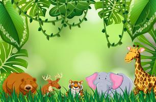 Animale selvatico nella giungla vettore