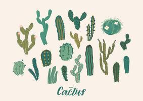 Set di raccolta di cactus. Illustrazione vettoriale Elemento di design