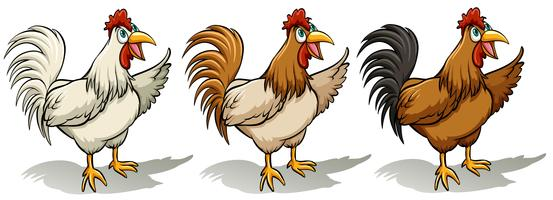 Gruppo di galli