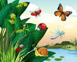 Diversi tipi di insetti allo stagno vettore