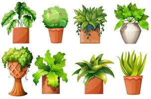 Una collezione di diverse piante in vaso vettore