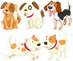 Diversi tipi di cuccioli di cane vettore