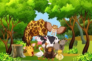 Molti animali nella foresta
