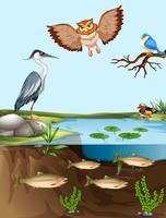 Uccelli e pesci vicino allo stagno vettore
