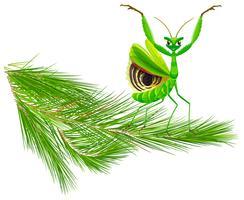 Mantide sul ramo di un albero di pino vettore