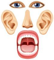 Un insieme di elementi facciali vettore