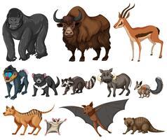 Diversi tipi di animali selvatici su bianco vettore