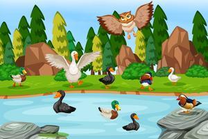 Uccelli nella scena del lago vettore