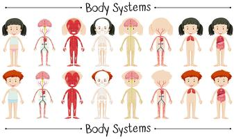 Sistema corpo di ragazzo e ragazza