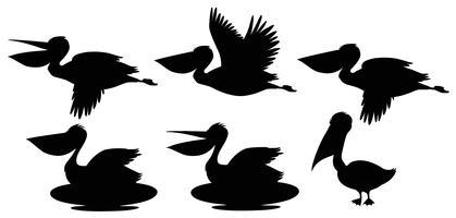 Set di pellicano silhouette vettore