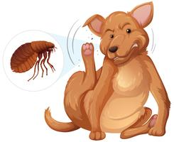 Concetto di pulce prurito cane