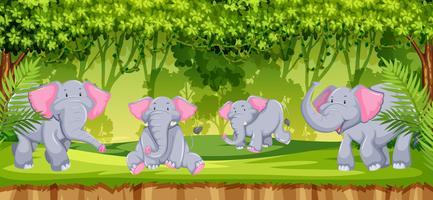 Elefanti nella scena della giungla vettore