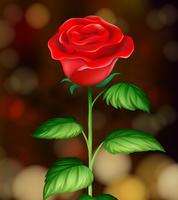 Una bella rosa rossa sullo sfondo