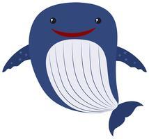 Balena blu su sfondo bianco