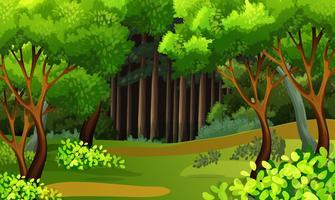 Una bella scena tropicale foresta pluviale vettore