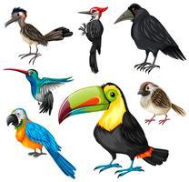 Diversi tipi di uccelli selvatici