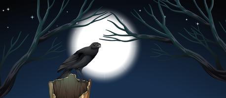 Uccello nella scena notturna